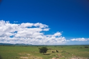 serengeti-north-07