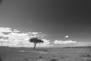 serengeti-north-08