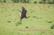 serengeti-north-11