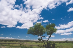 serengeti-north-17