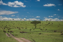 serengeti-north-20
