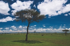 serengeti-north-21