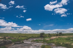 serengeti-north-24
