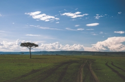 serengeti-north-55
