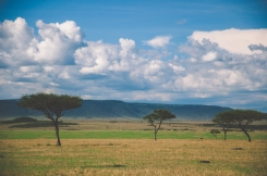 serengeti-north-56