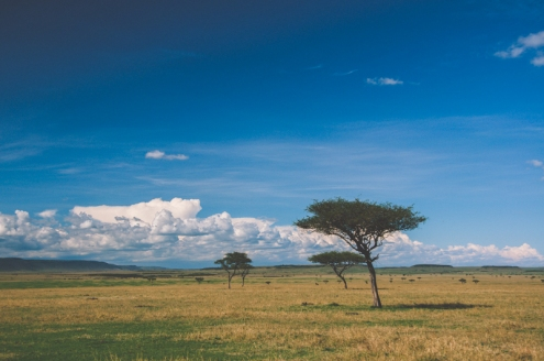 serengeti-north-57