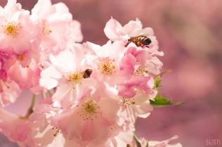 flowering-2015-01