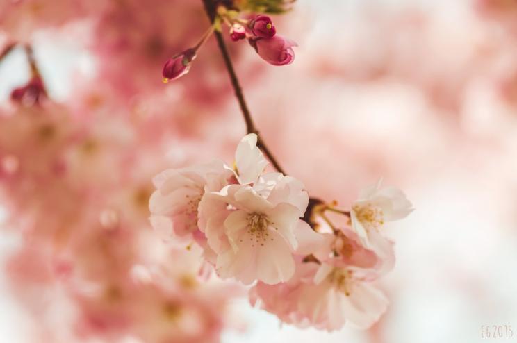 flowering2015-01