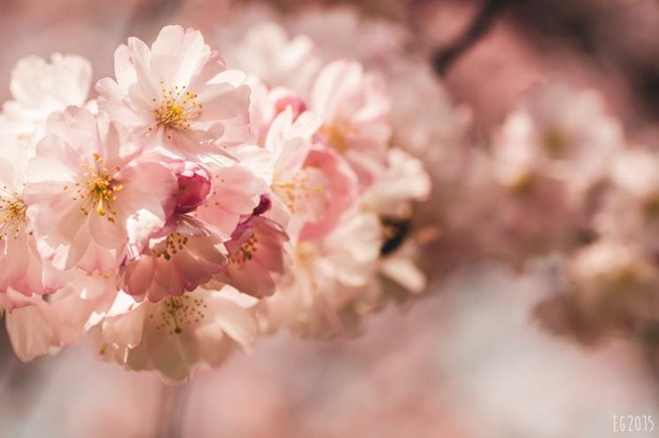 flowering2015-02