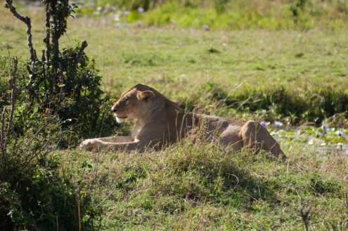 serengeti-migration-02