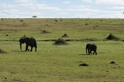 serengeti-migration-04