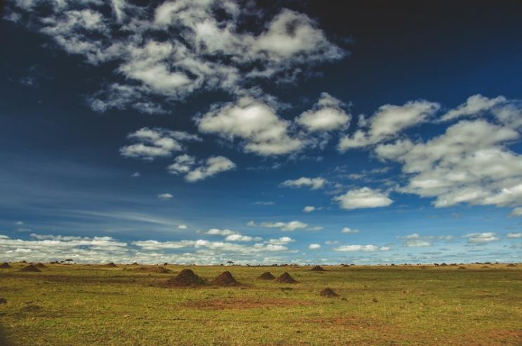 serengeti-migration-06