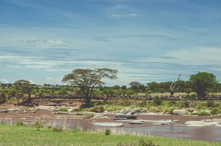 serengeti-migration-11