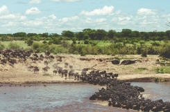 serengeti-migration-15