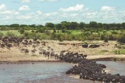 serengeti-migration-15
