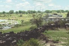 serengeti-migration-17