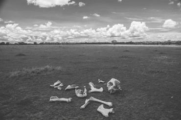 serengeti-migration-25