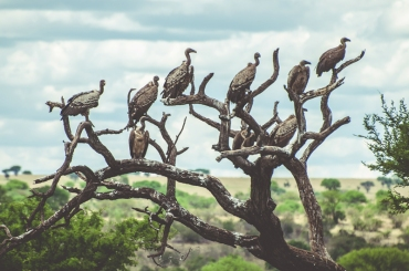 serengeti-migration-28