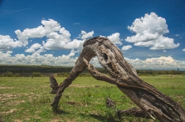 serengeti-migration-33