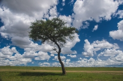 serengeti-migration-34