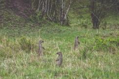 serengeti-migration-38