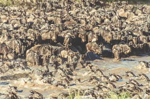 serengeti-migration-39