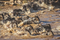 serengeti-migration-41
