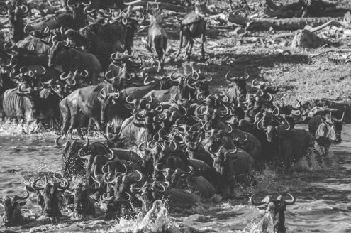 serengeti-migration-43