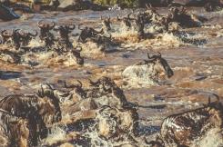 serengeti-migration-47