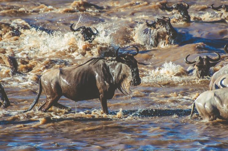 serengeti-migration-50