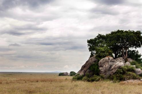 serengeti-south-012