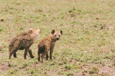 serengeti-south-018