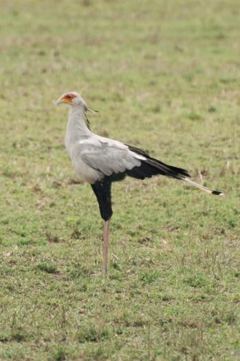serengeti-south-019