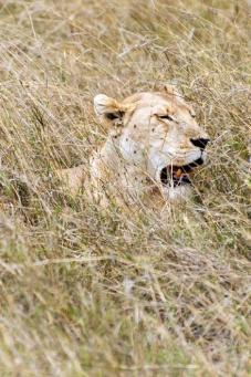 serengeti-south-020
