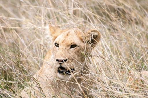 serengeti-south-021
