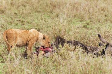 serengeti-south-022