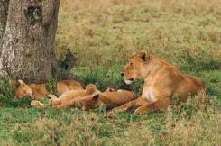 serengeti-south-024