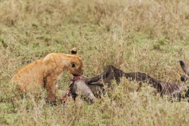 serengeti-south-025