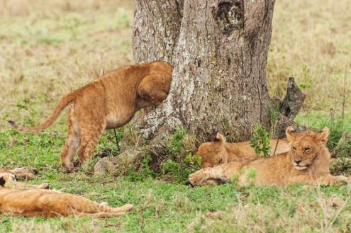 serengeti-south-026