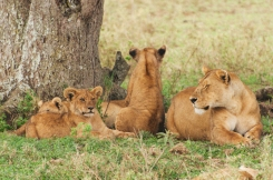 serengeti-south-028