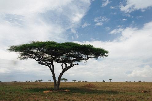 serengeti-south-029