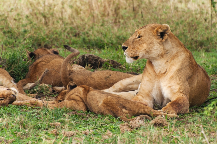 serengeti-south-033