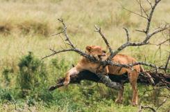serengeti-south-034