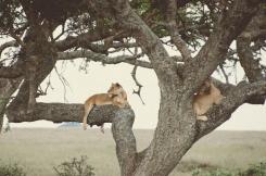 serengeti-south-037
