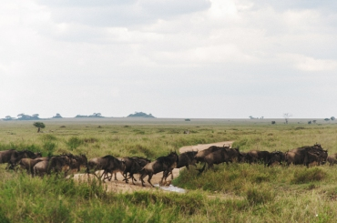 serengeti-south-039