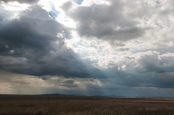 serengeti-south-043
