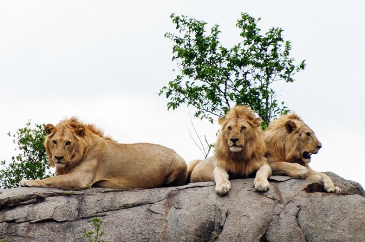 serengeti-south-048