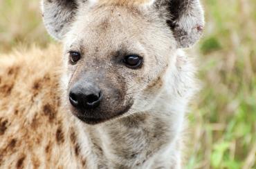 serengeti-south-052