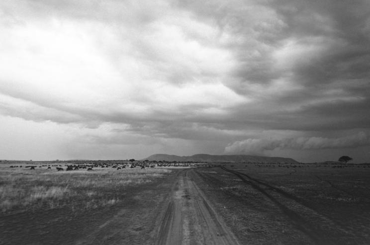 serengeti-south-055