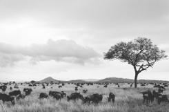 serengeti-south-057
